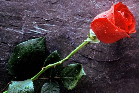 Hay quien el miedo a las espinas de la rosa le impide disfrutar de su aroma